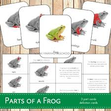 Parts Of A Frog Parts Of A Frog Montessori 3 Part Cards And Definitions Tpt