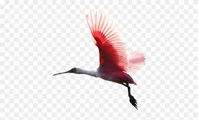 colorful birds flying clipart. Plain Flying Png  Colorful Birds Flying Inside Clipart