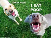 500+ <b>Funny Dogs</b> ideas | dogs, <b>funny dogs</b>, cute animals