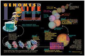 Systems Biology Wikipedia
