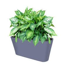 Image Plant Hire Ergo Self Watering Planter Pot Modern Indoor Outdoor Planter Box Savvygrow Ergo Self Watering Planter Pot Modern Indoor Outdoor Planter Box