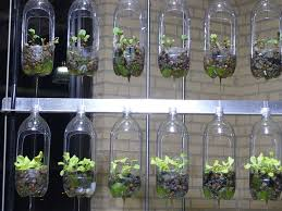 indoor gardening ideas. Used Plastic Bottles 3d5c8e2c14806a5cf476fc917a59edb8 Indoor Gardening Ideas