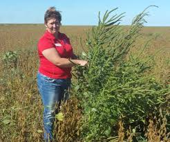 Palmer Amaranth Palmer Amaranth Informational Meeting Osu Extension Clermont County