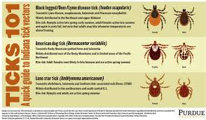 Tick Identification Chart Bit By A Tick Next Steps And Species To Know Purdue