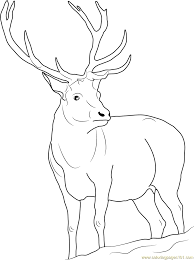 Small Picture Coloring Pages Reindeer Caribou Coloring Page Free Printable