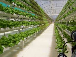 AGRITECTURE - More people are considering hydroponic greenhouse.