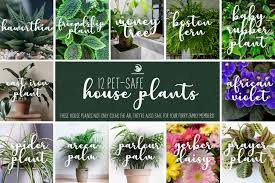 12 pet safe house plants dog cat and
