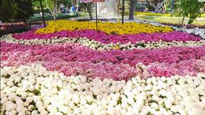 Small Picture 4K Most beautiful garden flower festival in Chiang Mai Thailand