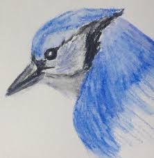 welcome to blue jay take two brought to you by caran d ache s fabulous neocolor ii water soluble pastels thanks once again to kathy at backyard bird nerd