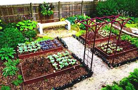 Kitchen Gardening Tips Basic Vegetable Garden Tips Luscious Green Herbs Contrast With