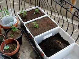 growing vegetables on your balcony