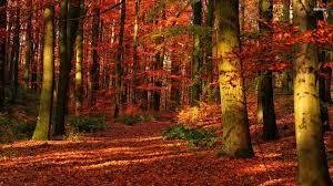 Autumn Forest Wallpaper For Desktop Hd ...