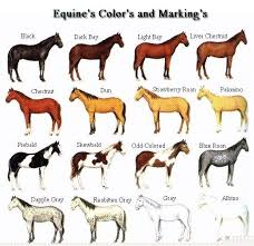 Foal Color Chart Free Horse Pictures To Color Coat Colors And Markings Of