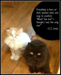 Quotes About Pets And Friendship Beauteous Download Quotes About Pets And Friendship Ryancowan Quotes