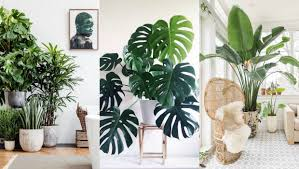 A List Of The Best Indoor Plants For Fabulous Home Decor