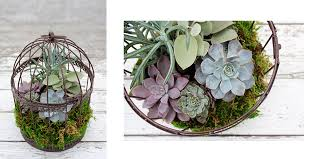 beyond succulents planting in a birdcage