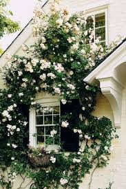 Small Picture Top 25 best Climbing roses ideas on Pinterest Climbing flowers