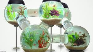 Amazing Aquarium Design Update 2018 40 Amazing Aquarium Fish Ideas 2018 Creative Home Design Fish Tank And Colors