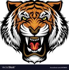 angry tiger face royalty free vector