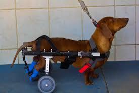 waggingwheels south african wheelchair
