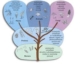 Five Kingdom Classification Chart The Kingdoms Of Life Science 6 At Fms
