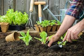 garden planting. start your own vegetable garden planting g