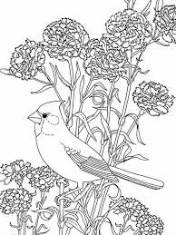 Small Picture Flower Bird Coloring Pages Coloring Pages
