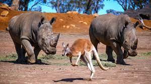 Taronga Western Plains Zoo in Dubbo ...