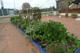 Rooftop Kitchen Garden Meet Nithila Organic Roof Top Gardener The Green Life