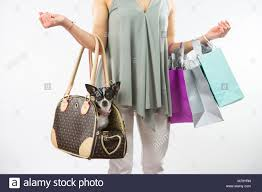Replica Designer Pet Carrier Designer Bags Stock Photos Designer Bags Stock Images Alamy