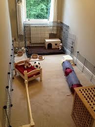 Amazing New Set Up   Rabbits United Forum
