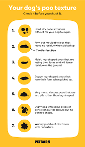 Dog Poo Chart What Each Stage Means Petbarn