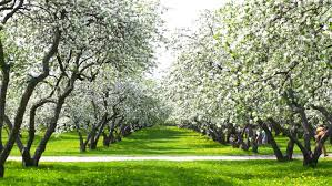 Small Picture Beautiful Blossoming Apple tree Garden Stock Footage Video 3337259