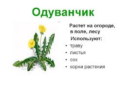 Урок развития речи Чудо растения й класс коррекционной школы  Назад