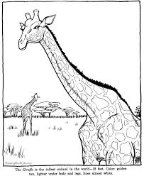 Giraffe Coloring Sheets And Pictures