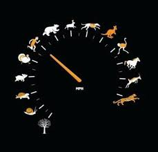 Animal Speed Chart The Fastest Animal Of Palnet The Bio Infos