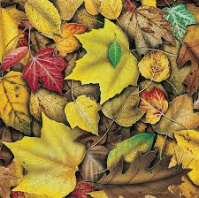 Jon Q Wright Painting - Fall Leaf Study by JQ Licensing