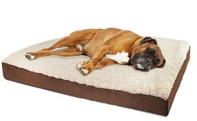 Top 10 Best Cheap Dog Beds