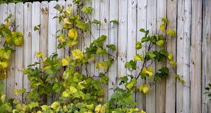 growing plants in my garden up fences