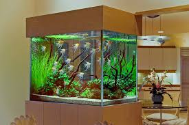 82 Aquarium Design At Home Amazing Aquarium Home Design