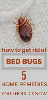 How To Get Rid Of Bed Bugs Quickly   Rubbing alcohol and Life hacks