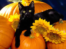 halloween black cat. Modren Halloween With Halloween Black Cat