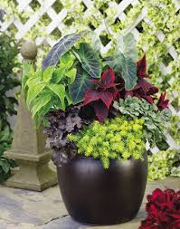 Diy Container Garden Planning And Planting Vegetable Plans A Home Container Garden Plans