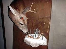 shed antler ideas photo 7 of trap exceptional deer wall decor rack mount horn mounting kits
