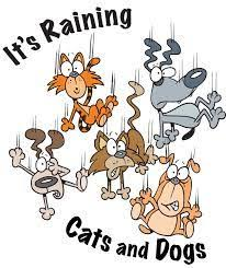 raining cats and dogs clipart. Exellent Dogs Great  With Raining Cats And Dogs Clipart Pinterest