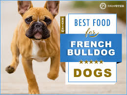 6 Best Foods To Feed An Adult And Puppy French Bulldog In 2019
