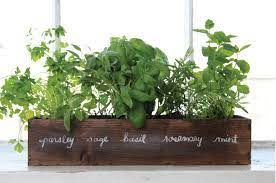 how to grow your very own indoor herb