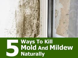 Best Bath Decor best bathroom cleaner for mold and mildew : 5 Ways To Kill Mold And Mildew Naturally