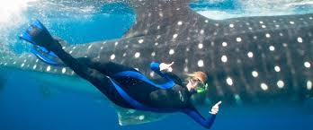 cancun whale shark tours and adventure trips the best tour  the top rated provider of whale shark tours on tripadvisor