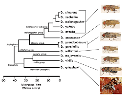 best images about drosophila genetics the gap 17 best images about drosophila genetics the gap wings and big picture